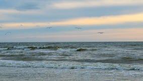 Baltisch strand in palanga Stock Fotografie