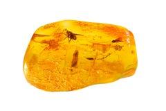 Baltische amber met opneming Stock Fotografie