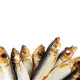 Baltische geräucherte Fische lokalisiert auf Weiß Lizenzfreies Stockfoto