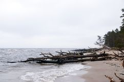 Baltische Küste, Kap Kolka, Lettland stockbild