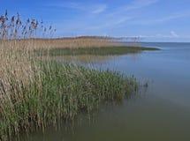 Baltische kust met grassen - Polen royalty-vrije stock fotografie