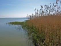 Baltische kust met grassen - Polen, Europa royalty-vrije stock foto's