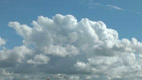 Baltische Wolken und Möven als Flecke timelapse stock video footage