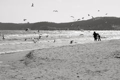 Baltischer Strand mit Möven Stockfotos