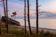 Baltischer Wald Stockfotografie