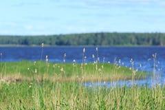 Baltisches Ufer Stockbild