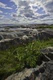 Baltisk kustlinje i sommar Royaltyfri Fotografi