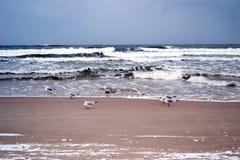 baltisk seacoast Royaltyfri Bild