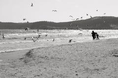 Baltisk strand med fiskmåsar arkivfoton