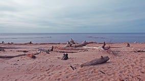 baltiska estonia nära havssomethere tallinn Arkivfoto