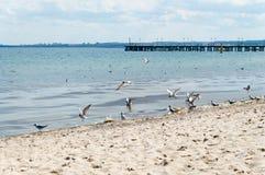 Baltiskt hav med sikt på pir i Gdynia Orlowo Arkivbilder