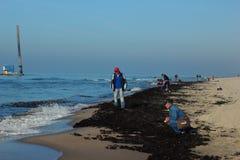 Baltiysk, Rússia - em outubro de 2018: Os turistas recolhem o âmbar na praia após a tempestade do mar fotografia de stock royalty free
