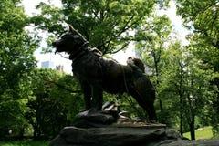 Balto monument in New York royalty free stock photos