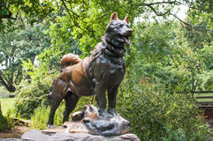 Balto statue. In Central Park NYC Stock Photography