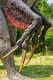 Baltow,波兰- 2017年8月02日:自然尺寸恐龙现实模型在侏罗纪公园在Baltow 免版税库存图片