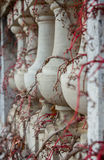 Balusters, die Reben twining sind Stockfoto