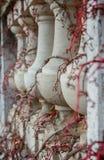 Balusters die wijnstokken kronkelen Stock Foto