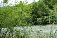 Balustrade avec des mauvaises herbes sur la rivière Photo stock