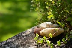 Balustrade superficielle par les agents avec la verdure Photo libre de droits