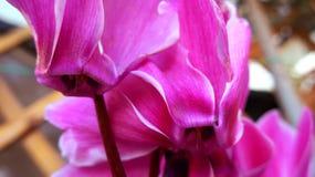 Balza i bei fiori di colori pieni fotografia stock