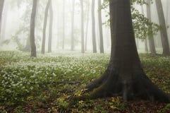 Balzi nella foresta con i fiori in fioritura e nebbia Immagine Stock