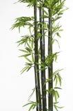 Bambù Fotografie Stock Libere da Diritti
