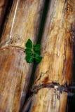 Bambù in acqua fotografia stock