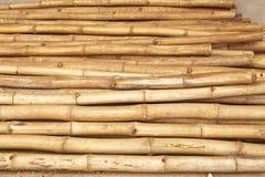 Bambù africano Fotografie Stock Libere da Diritti