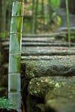 Bambù al lato della strada di pietra Immagini Stock
