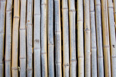 Bambù asciutto Immagini Stock