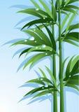 Bambù con le gocce dell'acqua Illustrazione di vettore Fotografia Stock Libera da Diritti