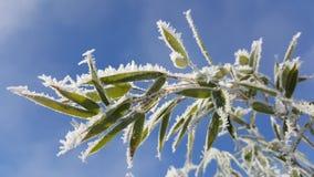 Bambù congelato fotografia stock libera da diritti