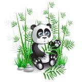 Bambù del panda Immagine Stock