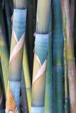 Bambù della barriera di Fernleaf Immagine Stock Libera da Diritti