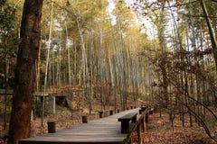 Bambù della primavera Fotografie Stock Libere da Diritti