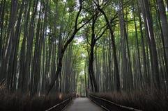 Bambù di Sagano Fotografia Stock