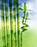 bambù e cielo blu Fotografie Stock