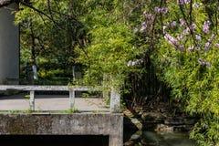 Bambù e costruzione-bellezza della molla e della luce del giardino immagine stock libera da diritti