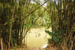 Bambù e fiume Fotografia Stock