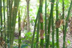 Bambù e piante di banane nel villaggio di delta del Vietnam il Mekong fotografia stock