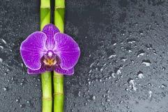 Bambù ed orchidea su fondo nero immagini stock libere da diritti