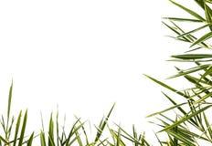 Bambù-foglie isolate. Fotografia Stock