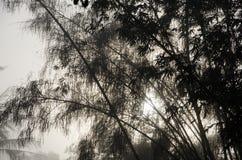 Bambù fra foschia fotografia stock
