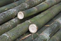 Bambù gigante, il più alta erba Immagini Stock Libere da Diritti