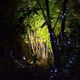 Bambù illuminato Fotografie Stock Libere da Diritti