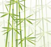 Bambù, illustrazione di vettore illustrazione di stock