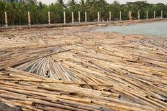 Bambù inzuppato in acqua sulla riva del fiume Fotografia Stock Libera da Diritti