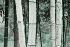 Bambù monotono Fotografie Stock Libere da Diritti