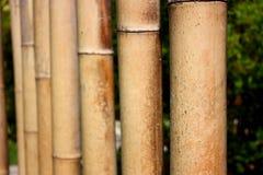 Bambù nel giardino Immagine Stock Libera da Diritti