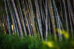 Bambù nella parete di verde-Brown del parco immagine stock